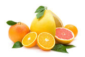 Different citruces — Stock Photo