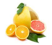 Citruses — Stock Photo