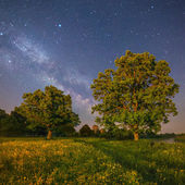 Starry night landscape — Stock Photo