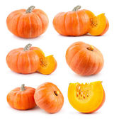 Collection of pumpkins — Stock Photo