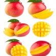 Collection of 6 mango — Stock Photo #50492969