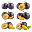 Collection of 6 plums — Stock Photo