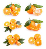 Collection of 6 mandarin — Stock Photo
