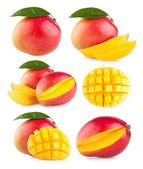 Collection of 6 mango — Stock Photo
