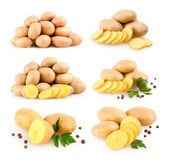 Collection of 6 potato — Stock Photo
