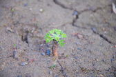 Sprout in dry ground — Stock Photo