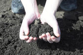 Clod of earth in the hands of the farmer — Stock Photo