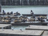 Forbes Island Seals — Foto Stock