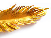 Paper golden feather — Stock Photo