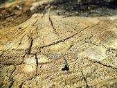 Popraskané dřevo textury — Stock fotografie