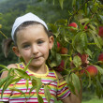 ������, ������: Girl picks peaches