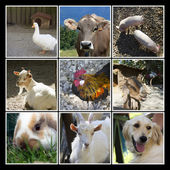Djur gården collage — Stockfoto