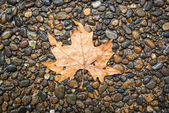 Maple leaf on floor — ストック写真
