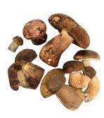 Wild mushrooms on white background — Stock Photo