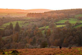 Dartmoor views. — Stock Photo