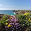 Bedruthan Steps — Stock Photo #43836849