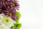Chrysanthemums — Stock Photo