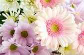 Pink Gerberas. — Stock Photo