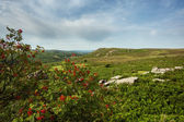 Holwell Tor — Stock Photo