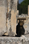 Cat, Ephesus Ruins — Stock Photo