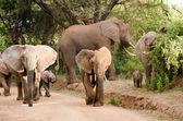 Elephants, Lake Manyara National Park — Stock Photo
