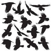 Crow silhouette set 01 — 图库矢量图片