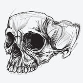 Skull Drawing — Stock Vector