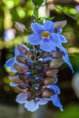 букет цветов — Стоковое фото