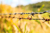 Barb wire — Stock Photo