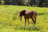 Horse on grass — Stock Photo