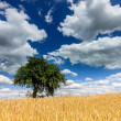 Lonely tree in the field of golden wheat — Stock Photo #44462781