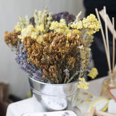 Dry flowers and plants — Stock Photo