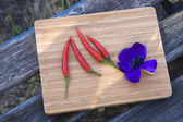 Anemone and red chilli — Stock Photo