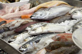 Stall of fishes — Stock Photo