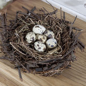 Eggs in the grassy nest — Stock Photo