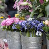 Loja de flores — Foto Stock