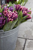 Tulip in basket — Stock Photo