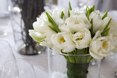 White tulip. — Stock Photo