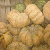 Fruits of a ripe pumpkin on market — Stock Photo