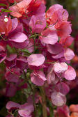 Blooms in summer season — Stock Photo