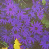 Card with blue daisy — Stock Photo