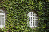 House with green  ivy — Stok fotoğraf