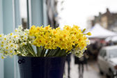 Daffodil in basket — Stock Photo