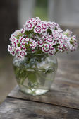 Flowers in glass  pot — Stock Photo