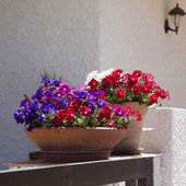 Outside basket with pink petunias. — Stock Photo