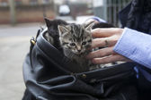 Suitcase with kittens — Stock Photo