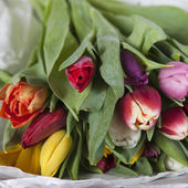 Yellow, pink, red, violet tulips  — Стоковое фото