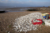 Oyster recycling in Whitstable, South East England — Stock Photo