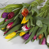 Yellow, pink, red, violet tulips  — Stock Photo
