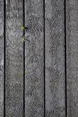 Grunge wood fence — Stock Photo